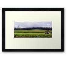 Pemberton Vineyard Panorama  Framed Print