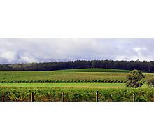 Pemberton Vineyard Panorama  Photographic Print