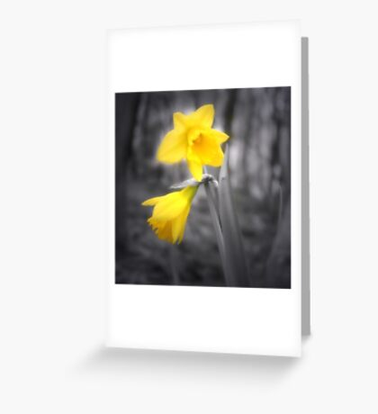 Lonely Dafodil Greeting Card
