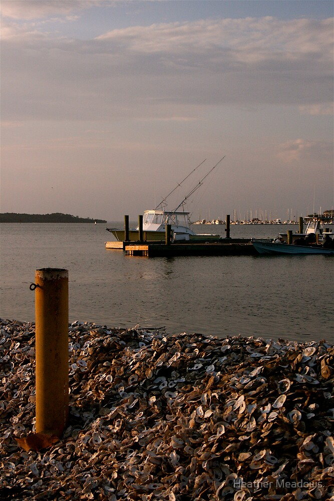 Oyster Bank by Heather Meadows