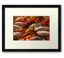 A frenzy of Fish Framed Print