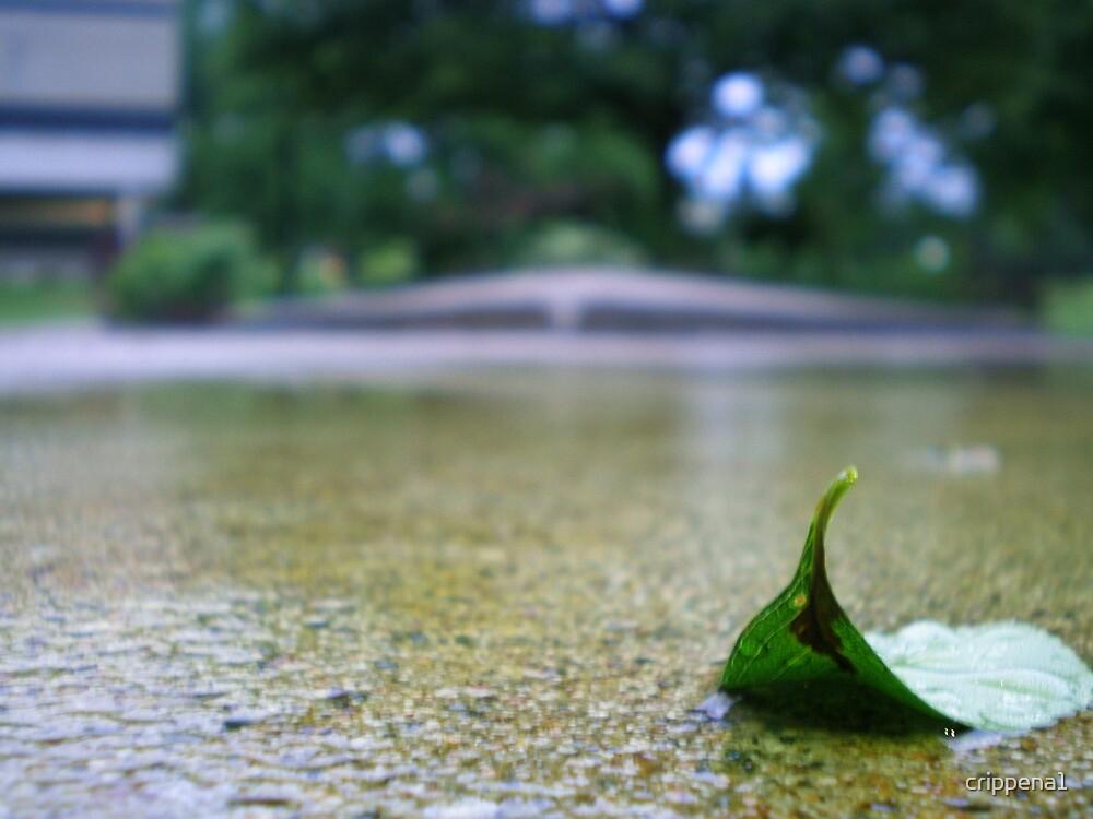 Rainy Day by crippena1