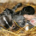 Baby Rabbits on a Farm by AnnDixon
