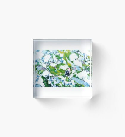 Water Lilies Acrylic Block