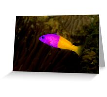 Royal Dottyback Greeting Card