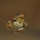 Undersided Lil Froggy  by Wviolet28