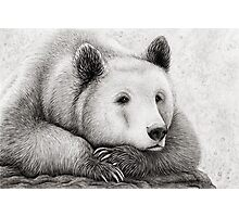 Brooding Bear Photographic Print