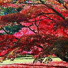 Westonbirt, Autumn Leaves by John Dalkin