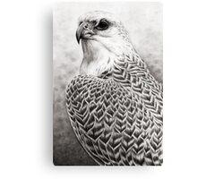 The Gyrfalcon Canvas Print