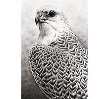 The Gyrfalcon Photographic Print