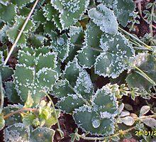 The frost by rachel715