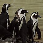 "Penguins just ""chillin"" by Kevin Price"