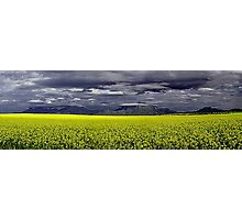Storm Over The Canola Field  Photographic Print
