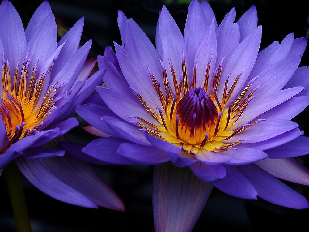 Golden Flower by breshneaf