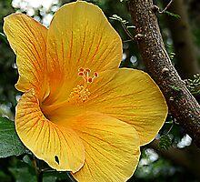 Yellow Flower by breshneaf