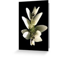 Pond Lilly Greeting Card