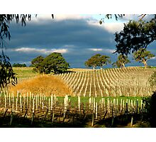 Howard Vineyard - Adelaide Hills Photographic Print