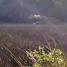 Soft beams of light meet bending grasses by Nadia Korths