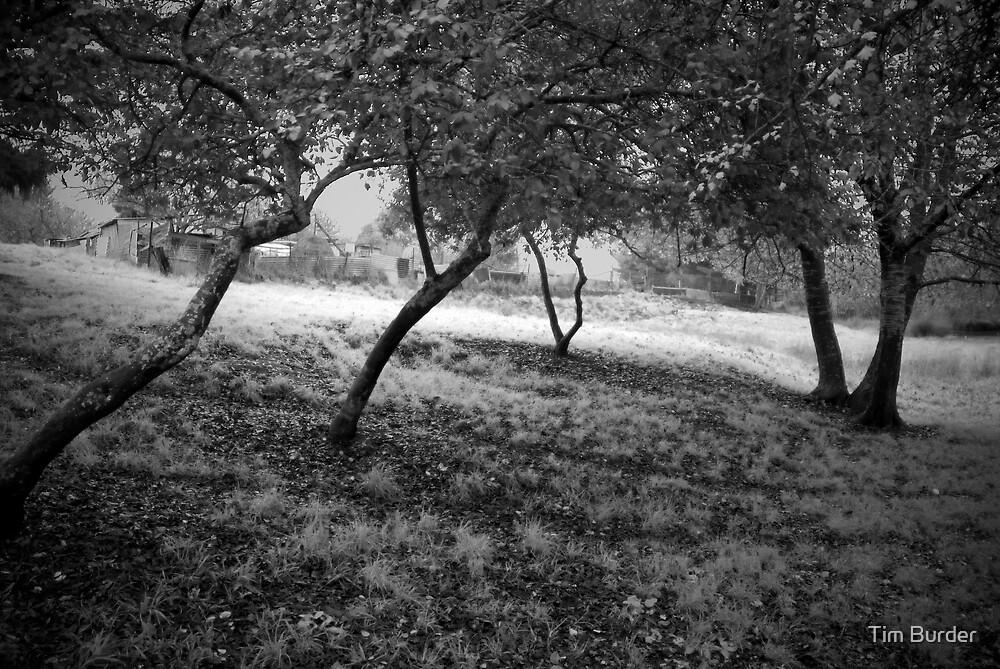Little Orchard by Tim Burder