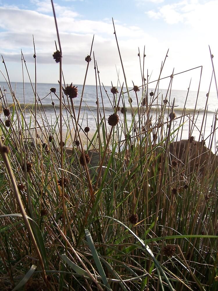Reeds by Princessbren2006