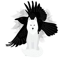 Ghost the Crow Photographic Print