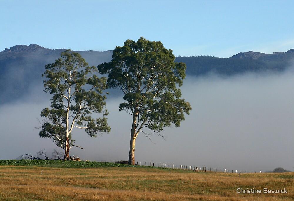 Mountain mist by Christine Beswick