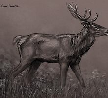 Red Deer sketch by Gaia Sorrentino