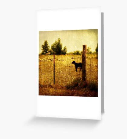 it's a dog's life Greeting Card