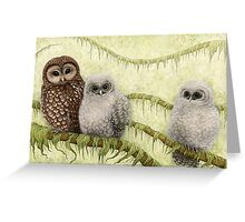 Northern Spotted Owls (Strix occidentalis caurina) Greeting Card