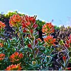 Coast Paintbrush by John Butler