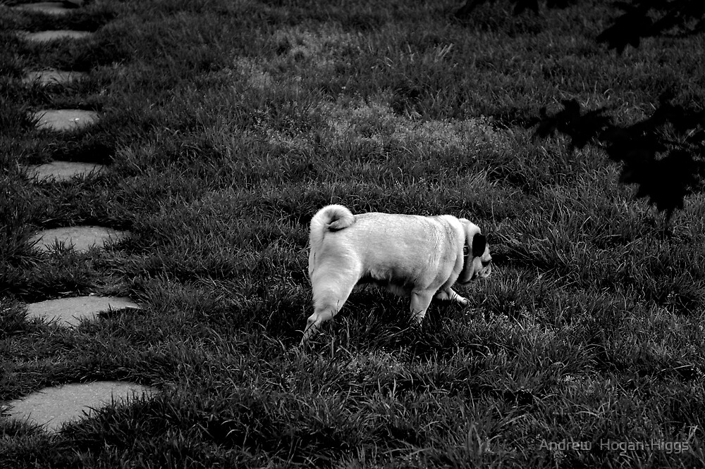 Ode' To The Pug! by Andrew  Hogan-Higgs