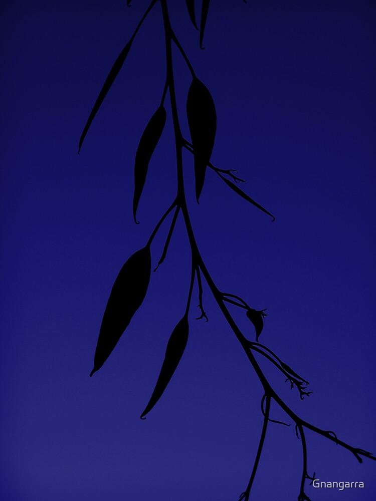 Blue gum by Gnangarra