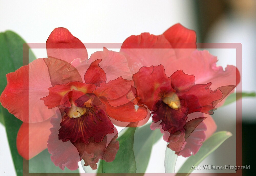 Merged Orchid #1 by Ann Williams-Fitzgerald