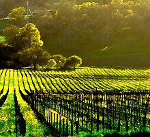 Napa Wineries  by John Sault