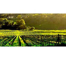 Napa Wineries  Photographic Print