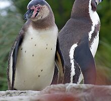 Penguins on Parade by Nooty