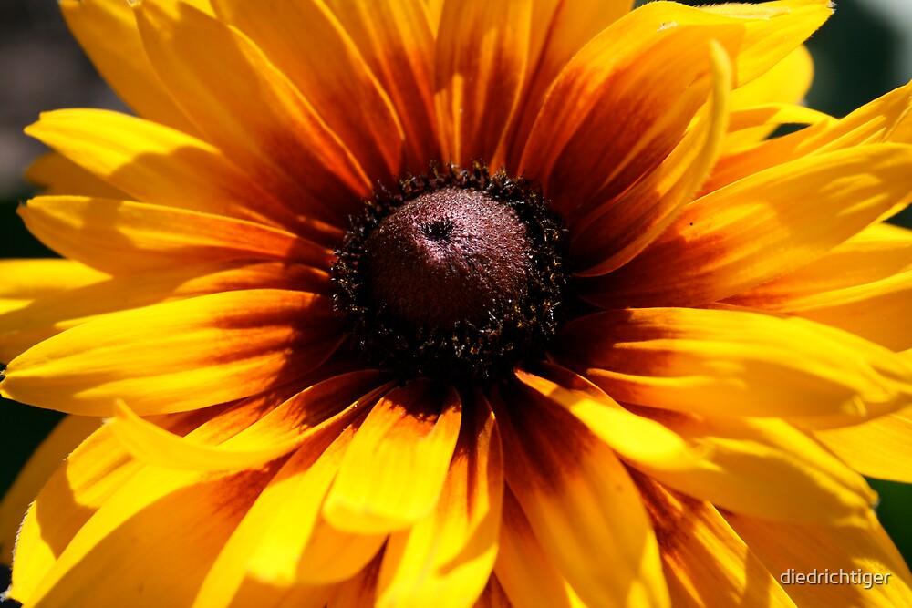 Explosion of flower by diedrichtiger