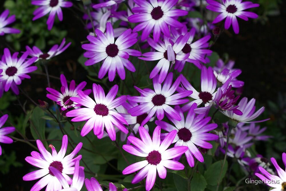 Purple by GingerLotus