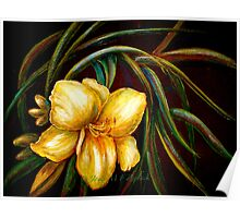 Flowers..DayLily Poster