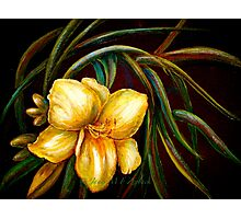 Flowers..DayLily Photographic Print
