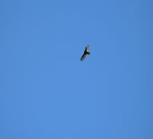 Soaring. by MadeIn1984