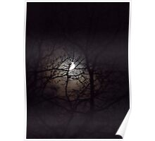 Moonlight Through the Trees Poster
