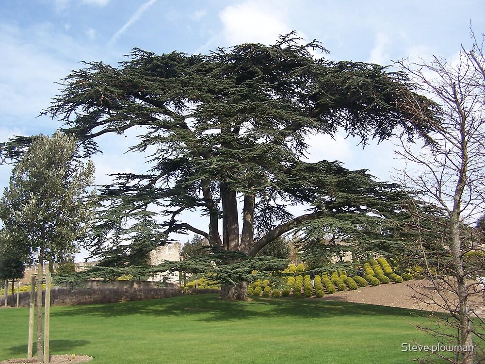 Gardens at Amboise by Steve plowman