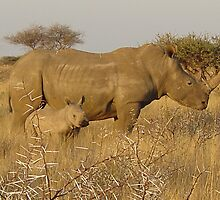 Rhino in S. Africa by Mathis