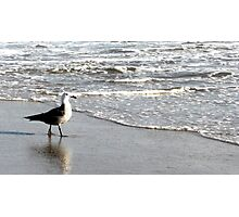 Watchful Seagull Taking a Walk Photographic Print
