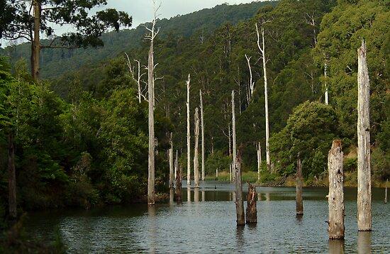 Lake Elizabeth Otway's by Joe Mortelliti