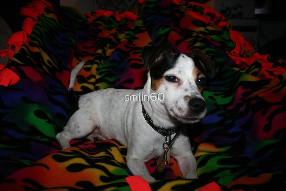 """Jack Russell Terrier my baby Allie Marie """"Allie girl"""" by Rachel Lewter"""