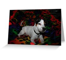 "Jack Russell Terrier my baby Allie Marie ""Allie girl"" Greeting Card"