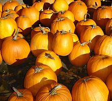pumpkins by vwarfield