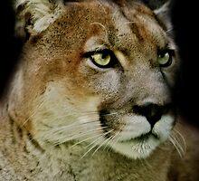 Puma by Natalie Manuel